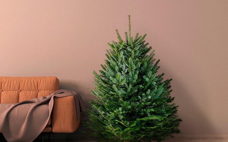 Датская елка с доставкой в Москве и области